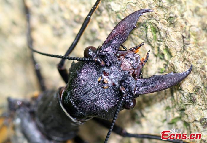bug-jaws
